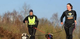 material-para-canicross correr con perros